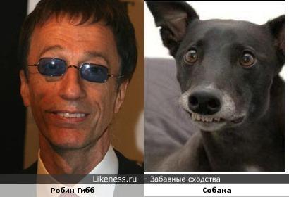 Робин Гибб и собака