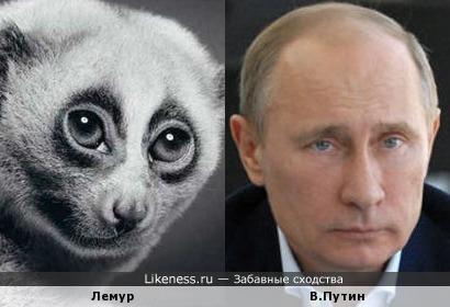 Путин и лемур