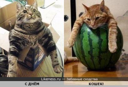 Квадратура круга, или С днём кошек! Голосовать не нужно )