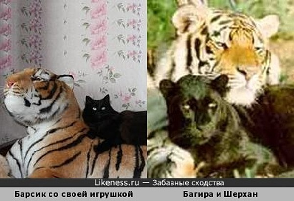 Кошка верхом на мягкой игрушке напоминает Багиру с Шерханом