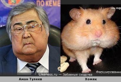Аман Тулеев похож на хомяка