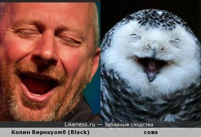 Минутка позитива) Колин Вирнкоумб (Black) и улыбающаяся сова