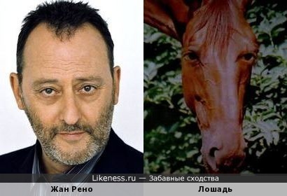 """Жан Рено похож на лошадь из фильма """"Невезучие"""""""