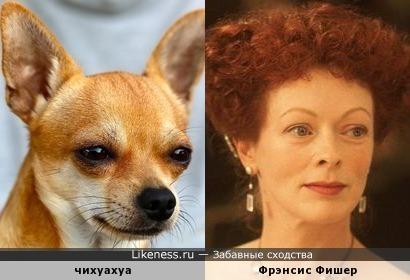 Чихуахуа и Фрэнсис Фишер