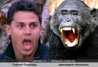 Сергей Пынзарь и кричащая обезьяна
