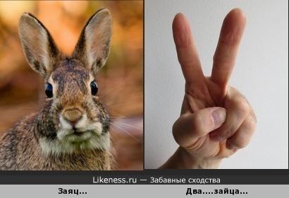 Два зайца и...победа...