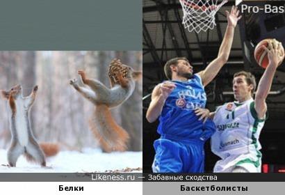 Белки-баскетболисты