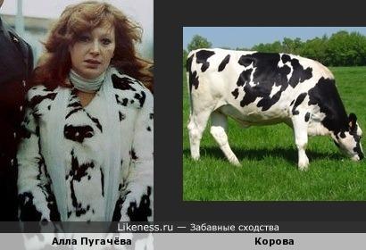 Алла Пугачёва похожа на корову