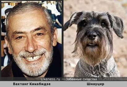 Кикабидзе похож на шнауцера