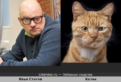 Илья Стогов похож на котика