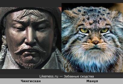 Чингисхан и Манул