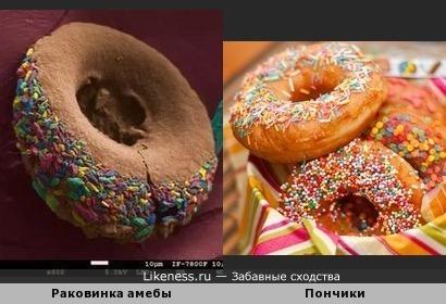 Раковинка амебы похожа на пончик с посыпкой