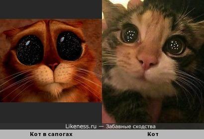 Звезды в глазах)