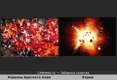 Кораллы красного моря похожи на множество взрывов