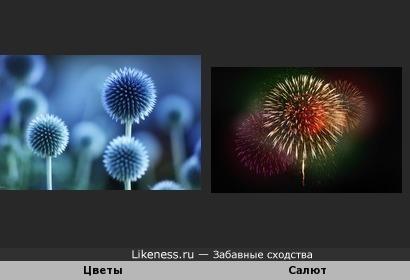 Цветы похожи на салют
