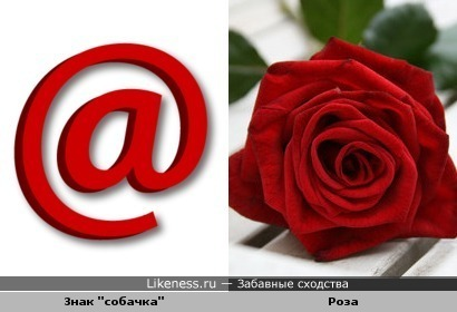 "Знак ""собачка"" так похож на розу"