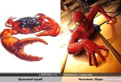 Красный краб vs Человек-Паук