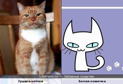 Кот, который нашел хозяина