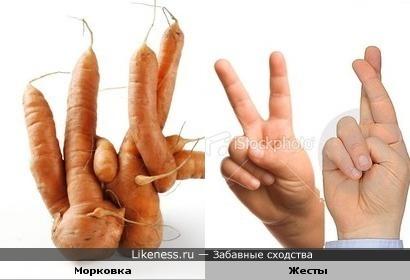 Морковочка намекает :)