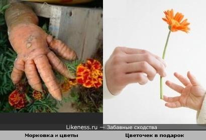 От сердца и почек дарю вам цветочек