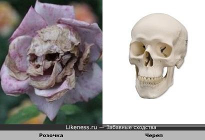 Розочка и череп
