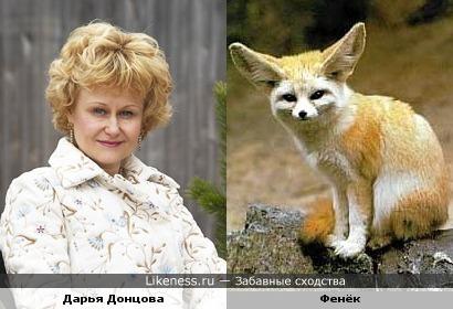 Донцова похожа на лисичку фенька