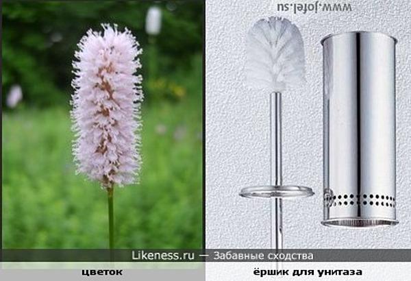 Цветок похож на ёршик для унитаза