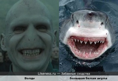 у Волди акулья улыбка
