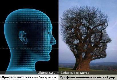 Ветви дерева напоминают профиль человека