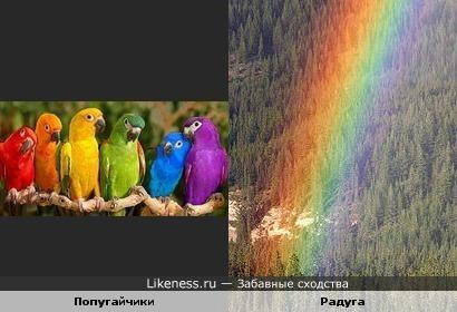 Каждый охотник желает знать, где сидит ... попугай