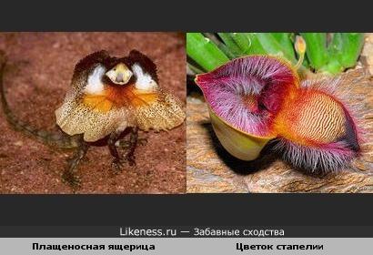 Ящерица похожа на цветок