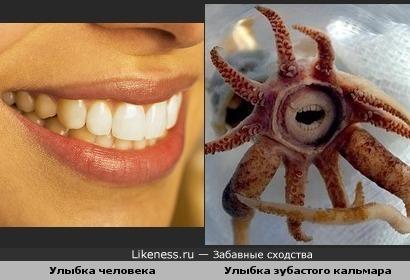 Зубка кальмара очень похожи на человечьи