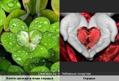 Капли дождя на листочке растения похожи на сердце