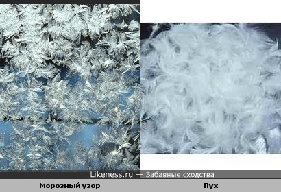 Морозный узор на стекле похож на птичий пух
