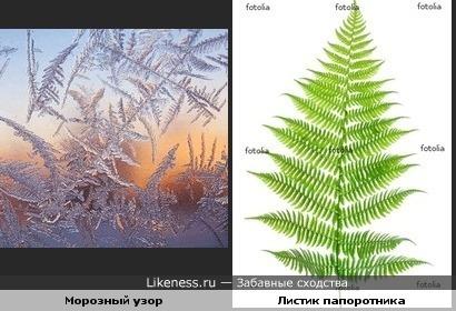 Морозный узор на стекле похож на листик папоротника