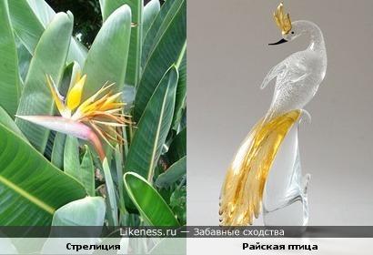 Цветок стрелиции похож на райскую птицу