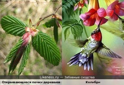 Молодые листики похожи на колибри