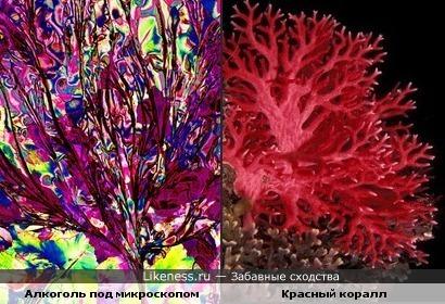 Алкоголь под микроскопом очень похож на красный коралл
