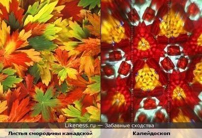 Осенние листья напомнили узор из калейдоскопа