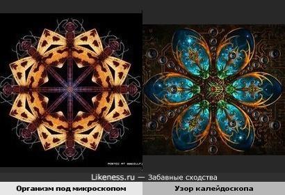 Организм под микроскопом похож на узор калейдоскопа (идея kuzenok)