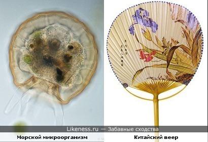 Морской микроорганизм очень похож на китайский веер