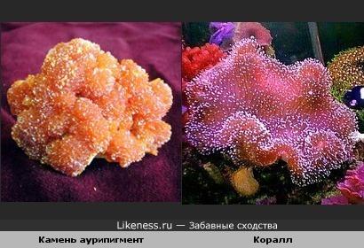 По-моему минерал и коралл похожи