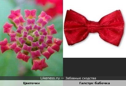 Цветочки похожи на галстук-бабочку