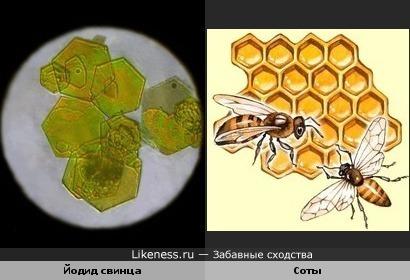 Йодид свинца под микроскопом похож на пчелиные соты