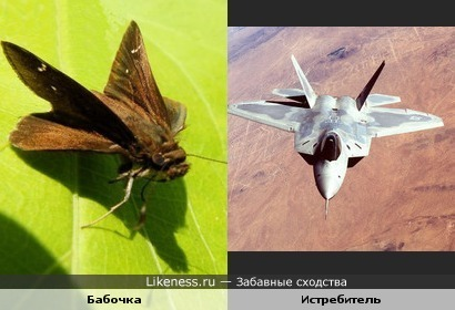 Бабочка похожа на истребитель