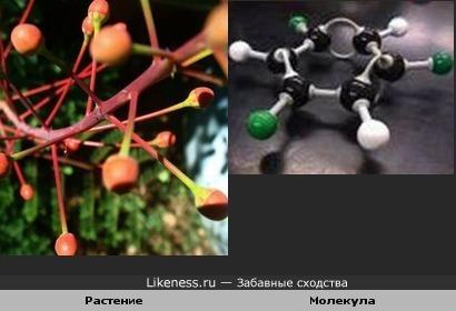 Растение похоже на молекулу
