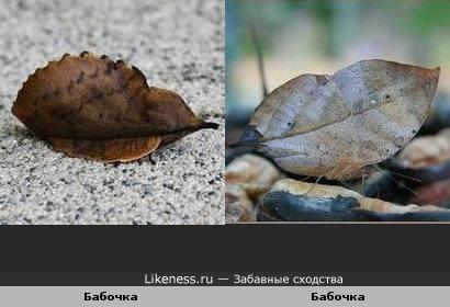 Живой гербарий