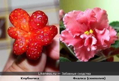 Клубничка похожа на цветок (навеяно постами amyleenlee)