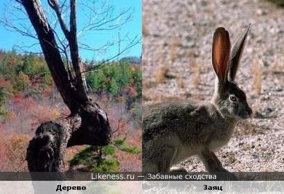 Деревяный заяц