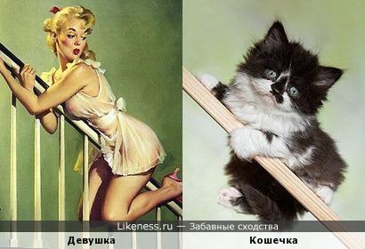 Игривые котята ;)